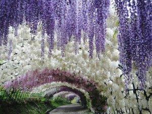 369029__spring-fantasy_p