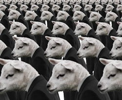 Conformity-Sheep2-250