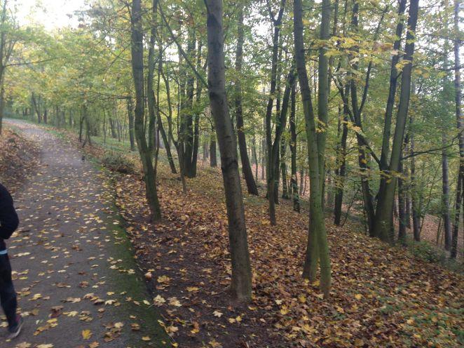 Wilson's Forest walkway